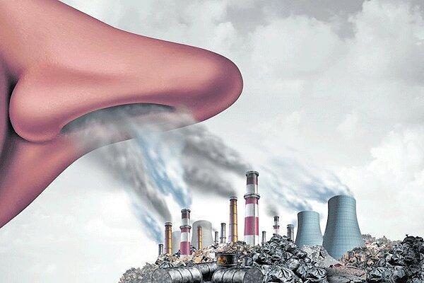 کاهش آلودگی هوا با چند راه چاره ساده ، مواد غذایی ارزشمند در دفع آلودگی هوا