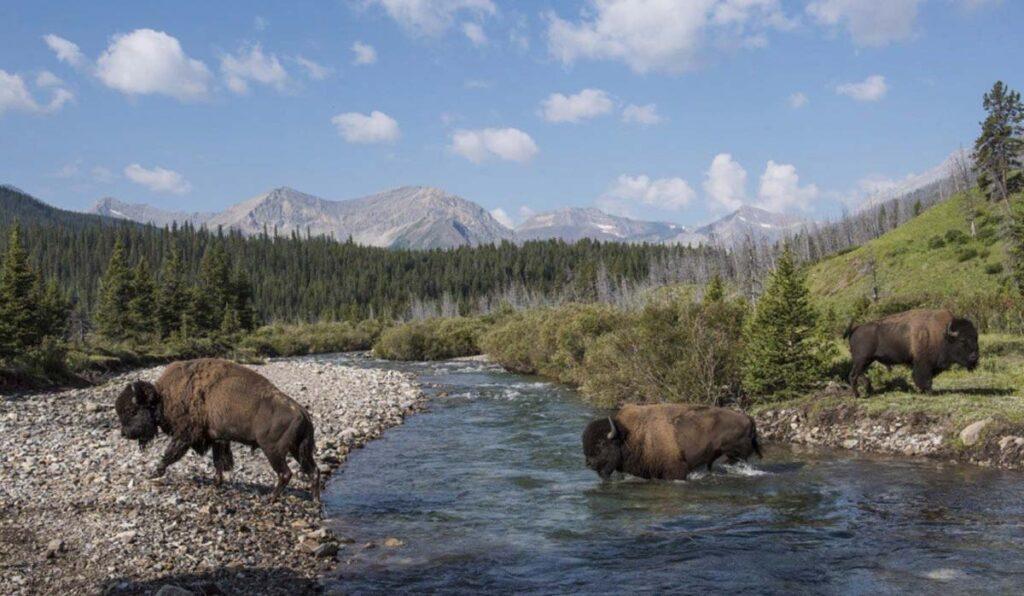 پارک های ملی کانادا، طبیعتی خارق العاده و نفس گیر