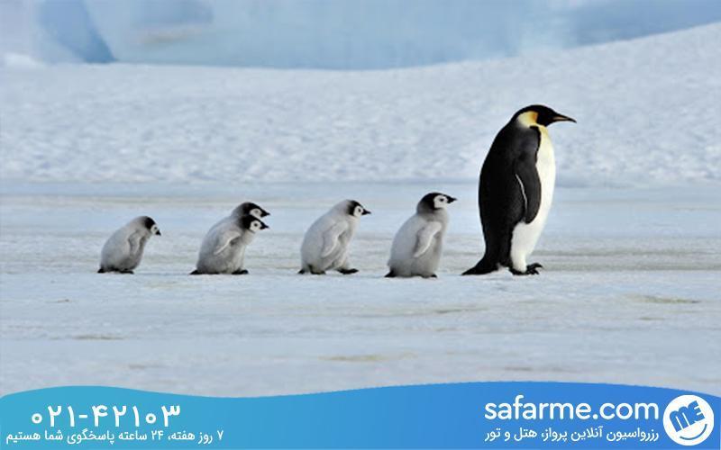 برای تماشای پنگوئن ها به کجا سفر کنیم؟