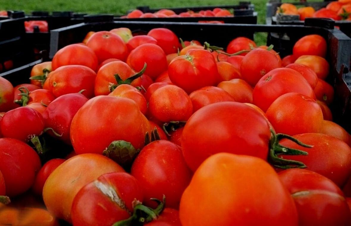 خبرنگاران پیشنهاد ممنوعیت مقطعی صادرات گوجه فرنگی مطرح است