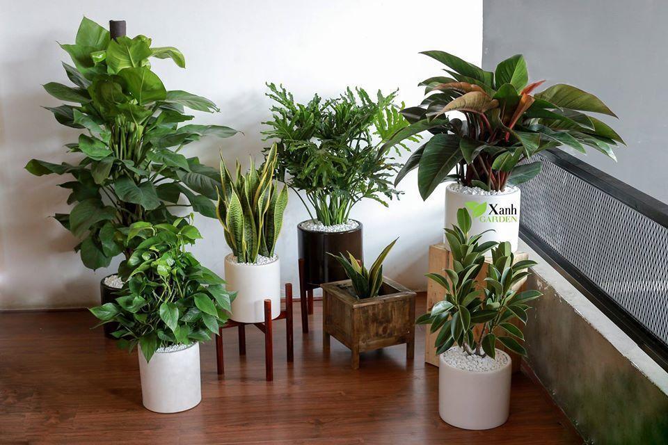 این گیاه ها امواج مضر را از بین می برند (بخش دوم)