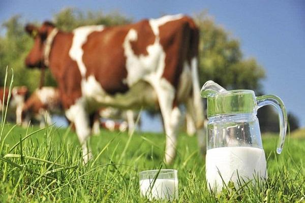 شیر خام چقدر گران شد؟